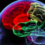 Four Great Ways To Keep The Brain Healthy