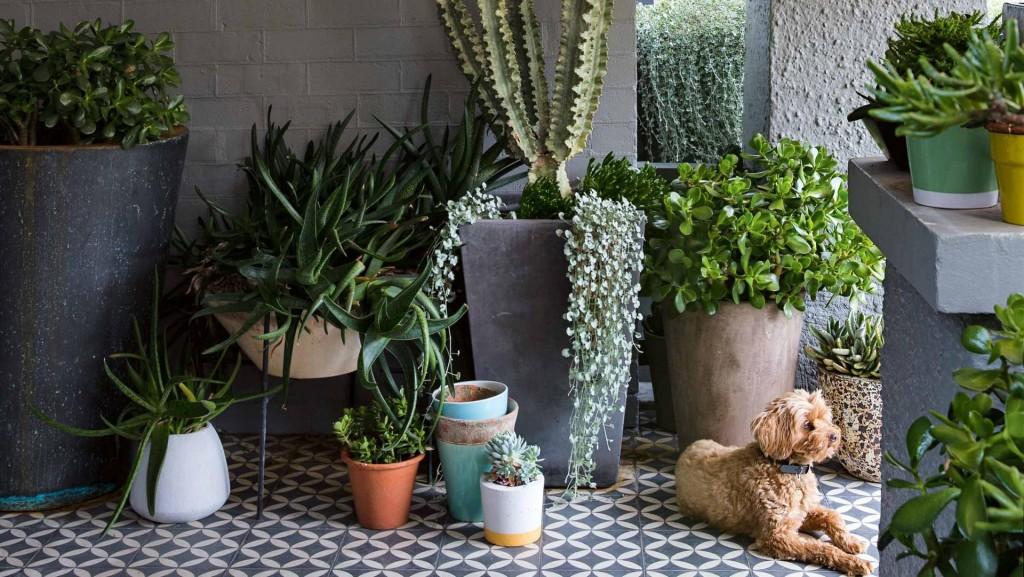pot-plants-porch-dog-peter-fudge-garden-apr15-20150408130955-q75,dx1920y-u1r1g0,c--