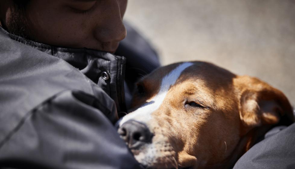 emotional support pet